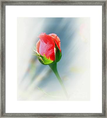 Just A Bud Framed Print