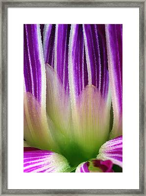 Just A Dahlia 1 Framed Print by Wendy Wilton