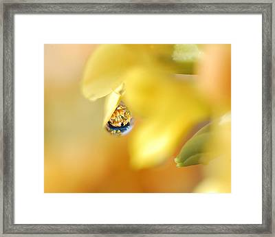 Just A Drop Of Spring Framed Print