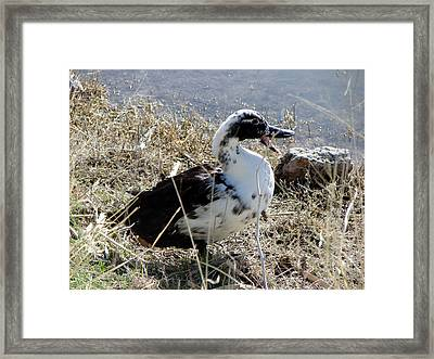 Framed Print featuring the photograph Just A Duck by Linda Cox