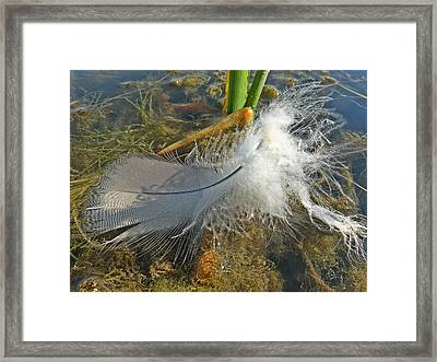 Just A Feather Framed Print by Scott Kingery