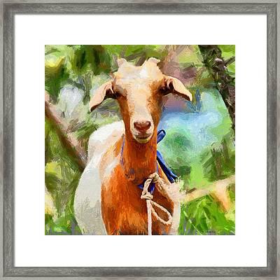 Just A Goat Framed Print by Kai Saarto
