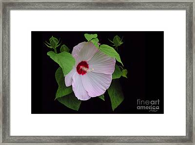 Just A Little Bashful Framed Print by Rebecca Morgan