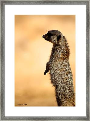 Just A Meerkat Framed Print by Dick Botkin