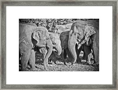 Just A Moment Framed Print by Steve Smith