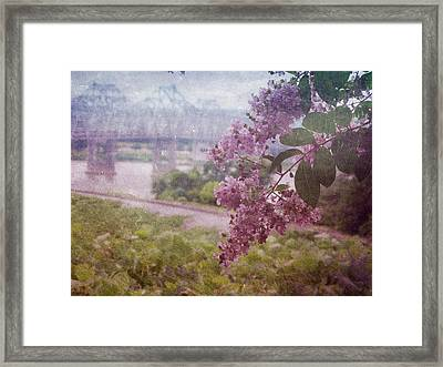 Just A Peek Framed Print by Terry Eve Tanner