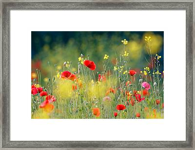 Just A Perfect Day Framed Print by Roeselien Raimond