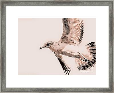Just A Seagull Framed Print