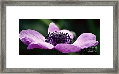 Just A Small Reach Framed Print by Emily Kay