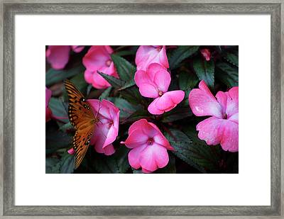 Framed Print featuring the photograph Just A Small Taste For This Butterfly by Thomas Woolworth