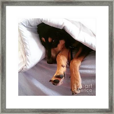 Just About To Fall Asleep. #dogs Framed Print