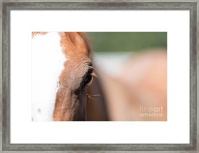Just An Eye Framed Print by Rebecca Cozart