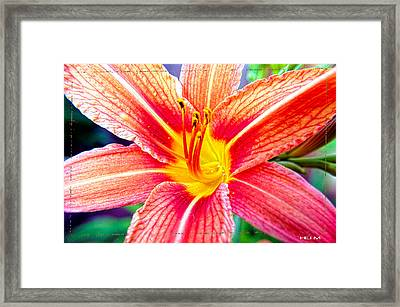 Just Another Day Lilly Framed Print