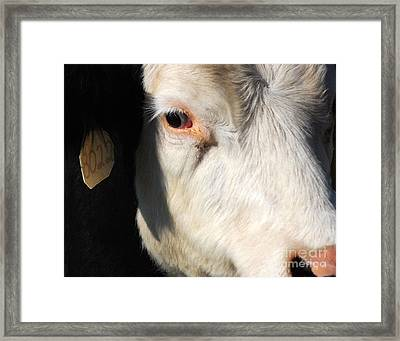 Just Another Pretty Face Framed Print by Jim Rossol