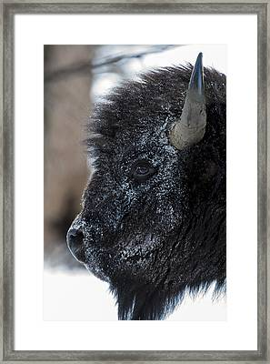 Just Another Winter Day Framed Print by David Yack