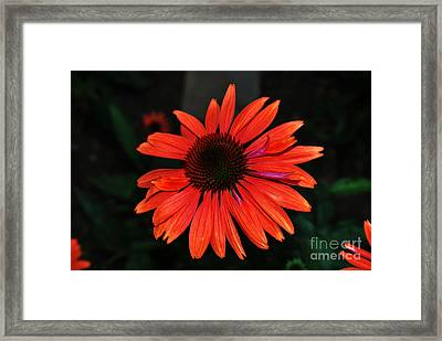 Just As Pretty Framed Print by Judy Wolinsky