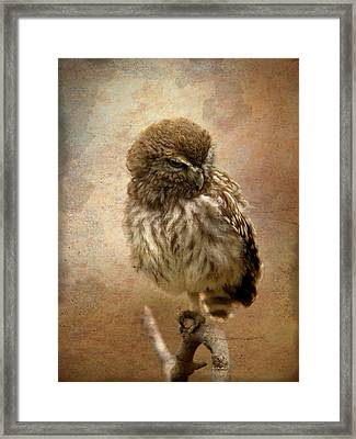 Just Awake Little Owl Framed Print by Perry Van Munster