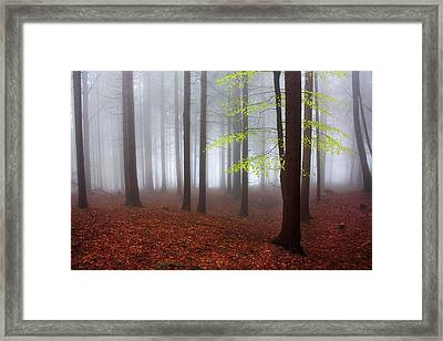 Just Awakened Framed Print