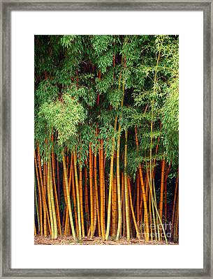 Just Bamboo Framed Print by Sue Melvin