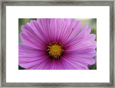 Just Beautiful Framed Print by Victoria Sheldon