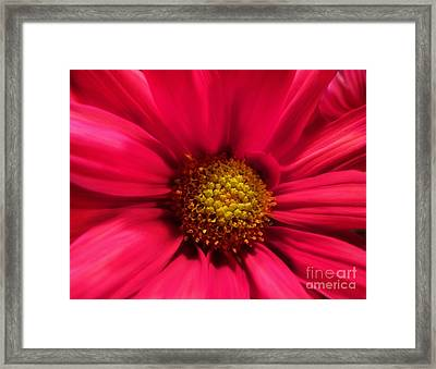 Just Because Flowers Framed Print by Diane E Berry