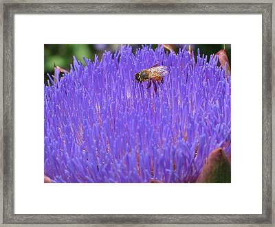 Just Beecause Framed Print