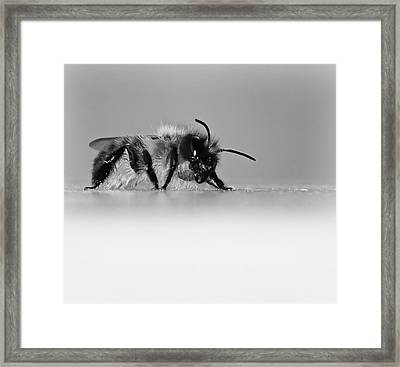 Just Beeing Me... Framed Print