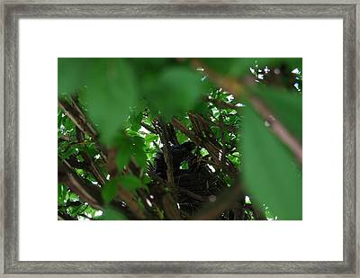 Framed Print featuring the photograph Just Before Flight by Ramona Whiteaker