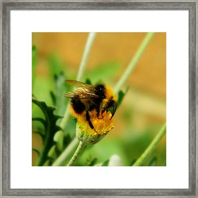 Just Being A Bee Framed Print by Sharon Lisa Clarke