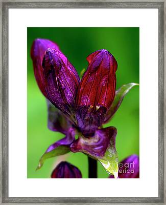 Framed Print featuring the photograph Just Blooming by Charles Lupica
