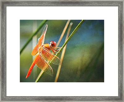 Just Breathe Framed Print by Leah Moore