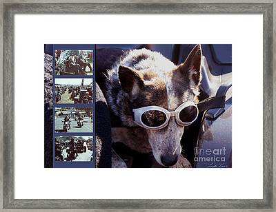 Just Call Me Dog Framed Print by Linda Lees
