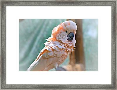 Just Call Me Fluffy Framed Print