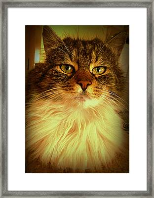 Just Cat Framed Print