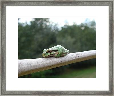 Just Chillin' Framed Print by Cheryl Hoyle