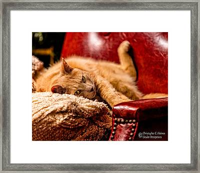 Just Chillin Framed Print by Christopher Holmes