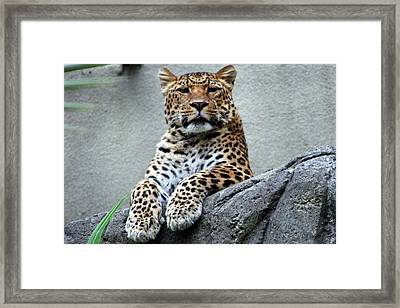 Just Chillin' Framed Print by DJ Florek