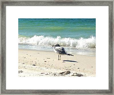 Just Chillin Framed Print by Margie Amberge