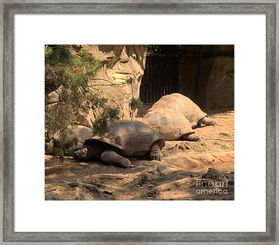 Just Chillin' Framed Print by Luther   Fine Art