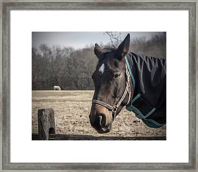 Just Chillin Framed Print