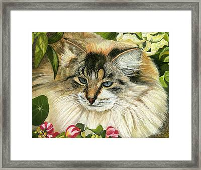 Just Chillin Framed Print by Sarah Dowson