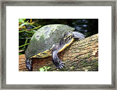Just Chilling Framed Print by Debra Forand