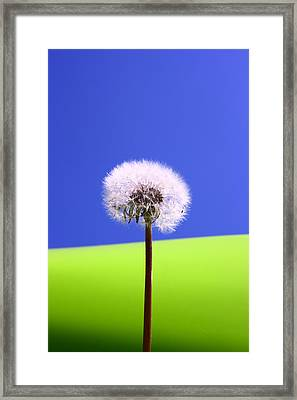 Framed Print featuring the photograph Just Dandy by Paula Brown