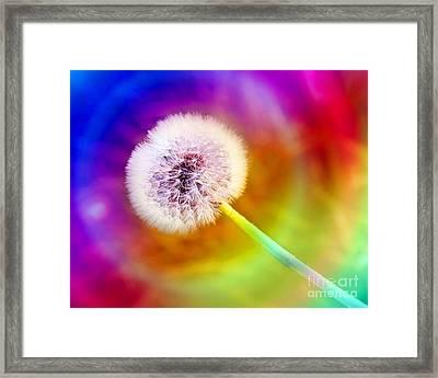 Just Dandy Taste The Rainbow Framed Print by Andee Design