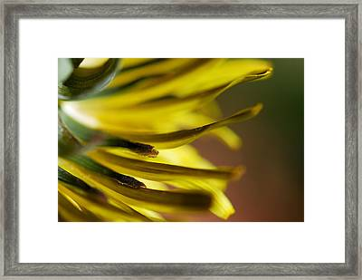 Just Dandy Framed Print by Wendy Wilton