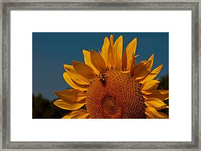 Framed Print featuring the photograph Just Deserts by John Harding
