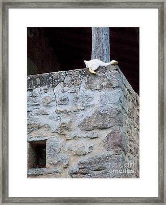 Just Duckie Framed Print