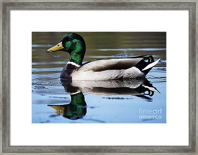 Just Ducky. Framed Print