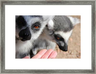 Just Feed Me...  Framed Print