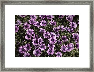 Just Flowers Framed Print